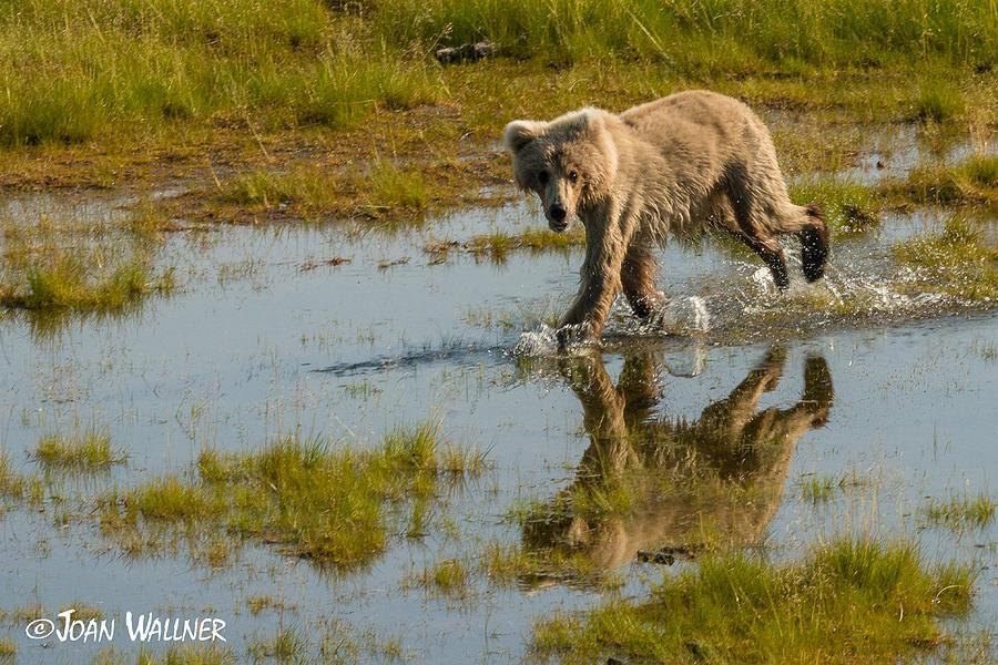 Alaska Photograph - Twin Reflection by Joan Wallner
