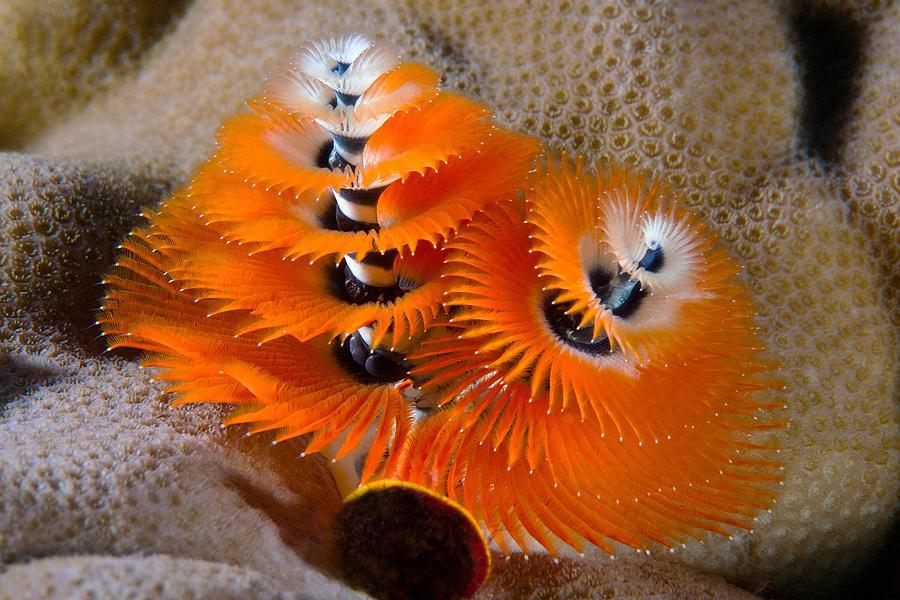 Fiji Photograph - Twin Trees by Paula Marie deBaleau