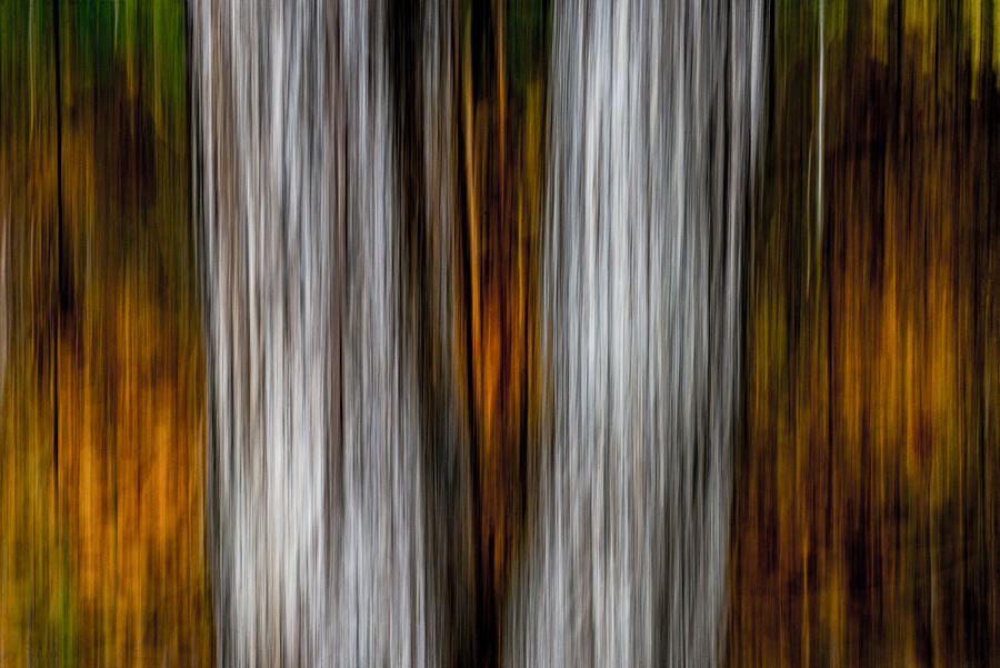 Twin trunks by Darryl Dalton