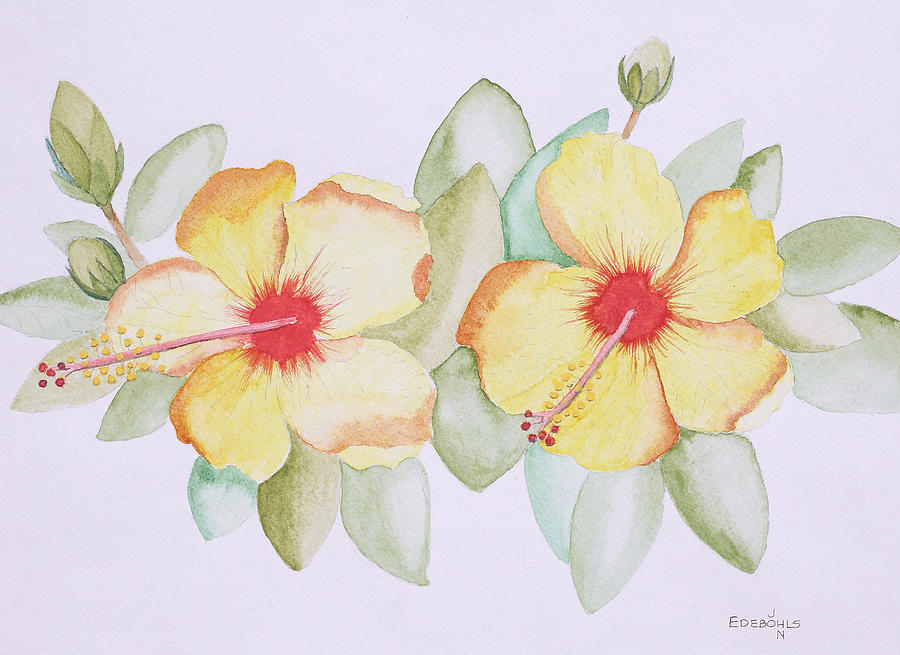 Hibiscus Painting - Twins by John Edebohls