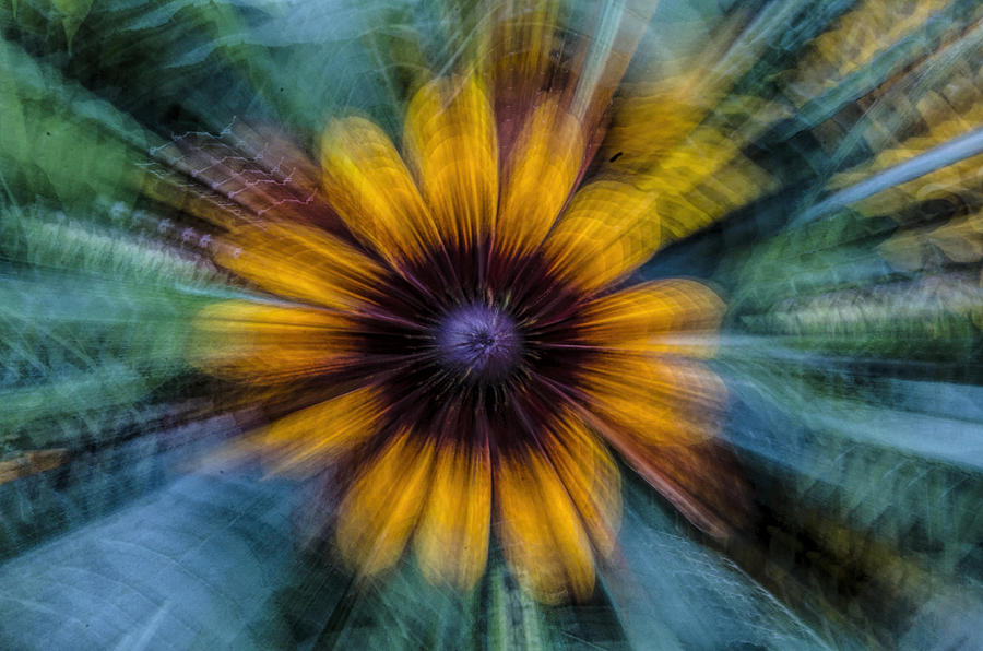 Flower Photograph - Twirling Flower by Irene  Theriau