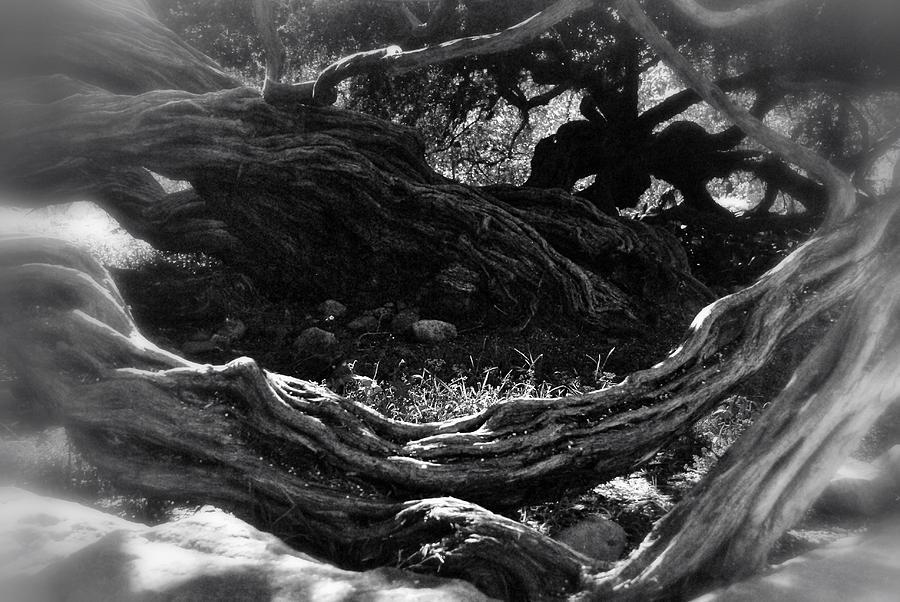 Tree Photograph - Twisted by Kelli Donovan
