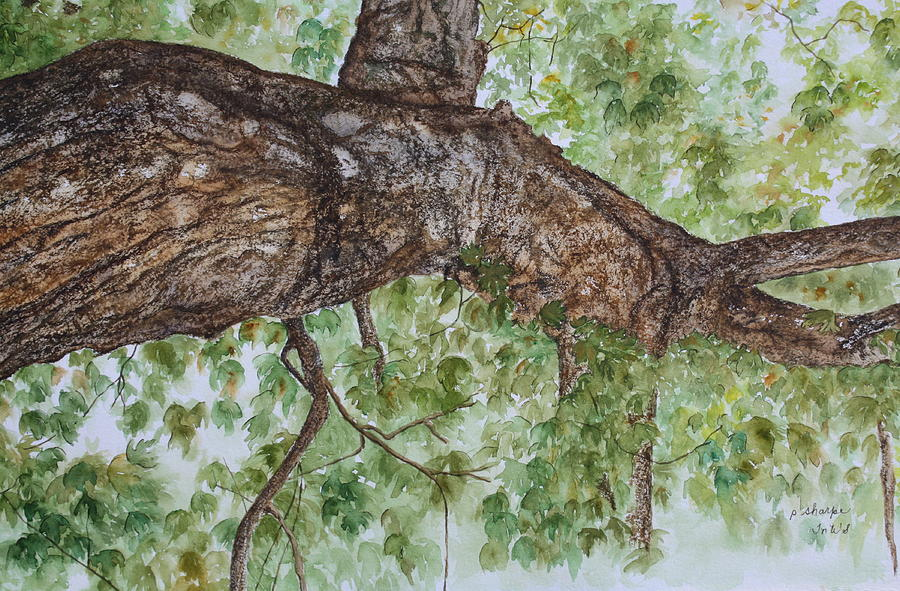 Nature Painting - Twisted Maple by Patsy Sharpe