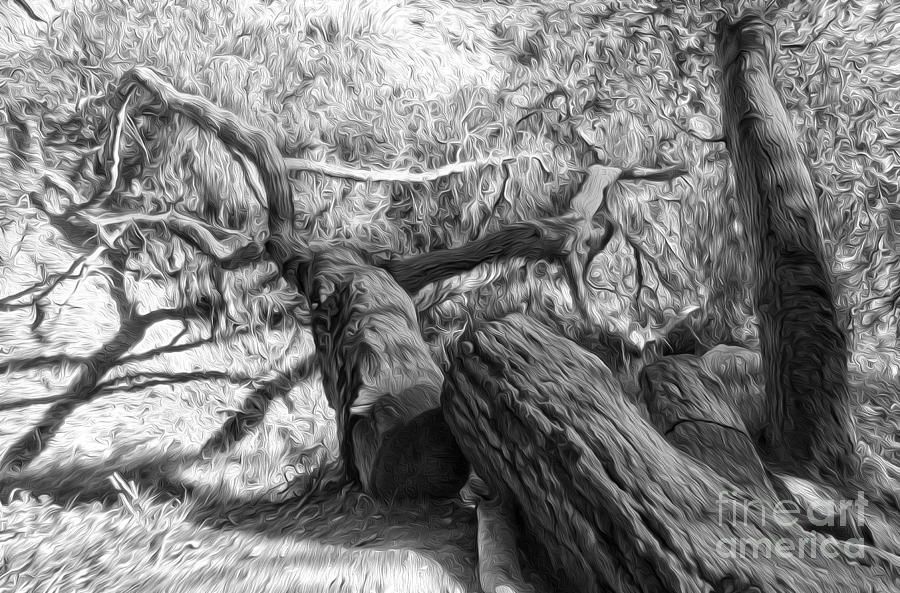 Twisted Painting - Twisted Tree - 03 by Gregory Dyer