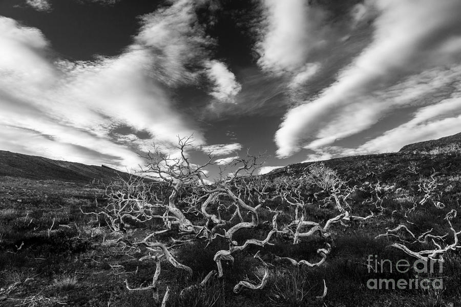Patagonia Photograph - Twisted Trees And Clouds by Timothy Hacker