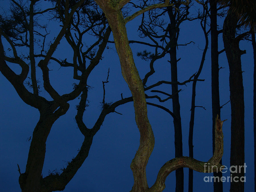 Trees Photograph - Twisted Trees at Twilight by Anna Lisa Yoder