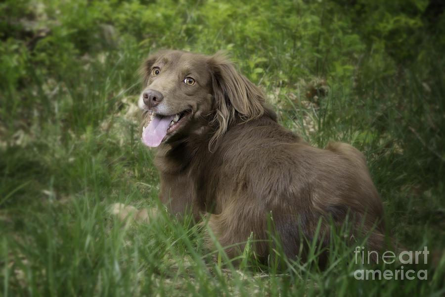 Pet Photograph - Twix by Donna Cloutier
