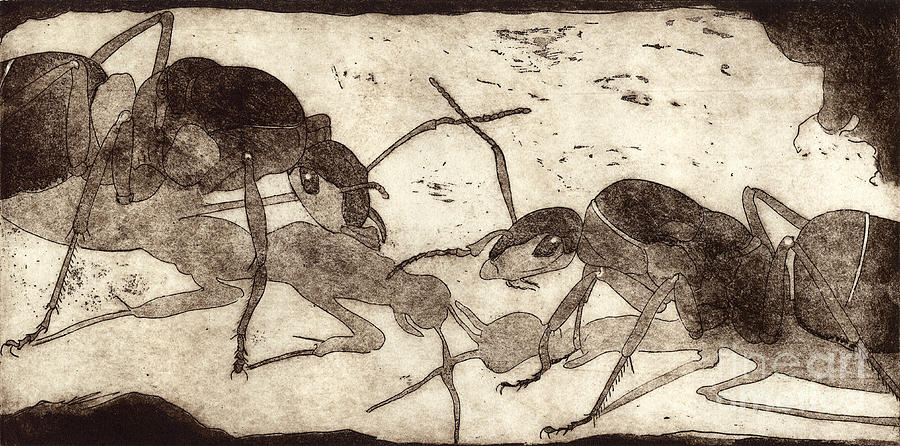 Ants Painting - Two ants in communication - etching by Helga Pohlen \ Urft Valley Art