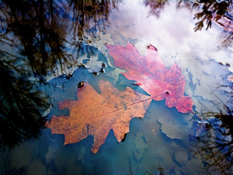 Water Photograph - Two Autumn Leaves by Milan Surkala