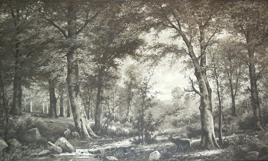 Forest Photograph - Two Centuries Ago by Sherlyn Morefield Gregg