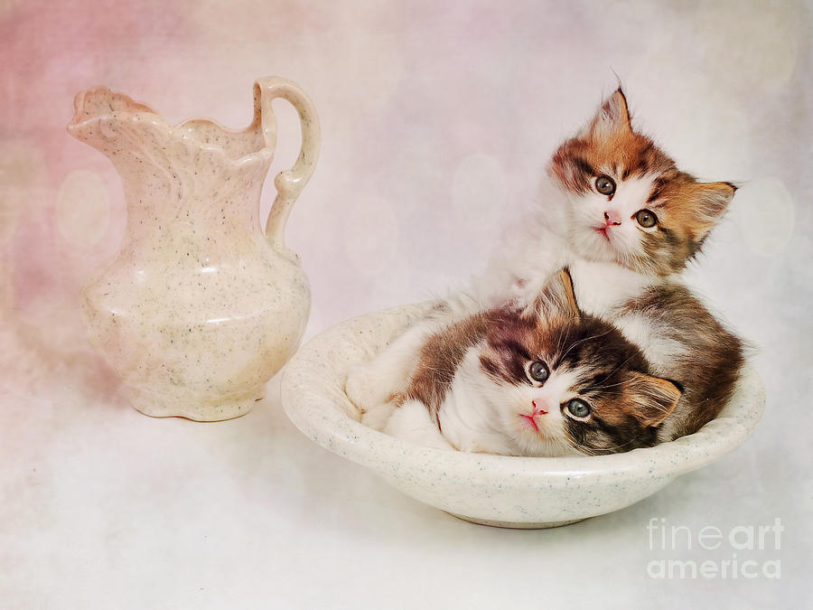 Two Clean Kittens  by Von McKnelly