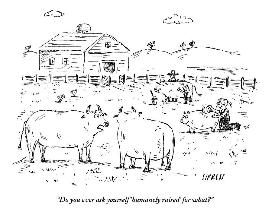 Two Cows On A Farm Talking Drawing by David Sipress