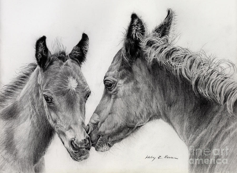 Two Foals Drawing
