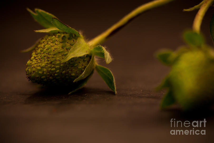 Two Green Strawberries by Patricia Bainter