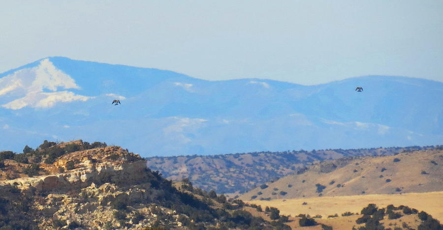 Two Hawks New Mexico Photograph by Alex  Call