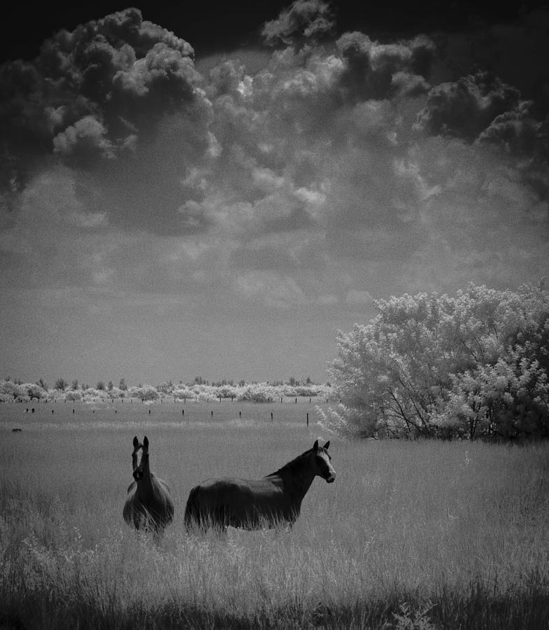 Two Horses by Bradley R Youngberg