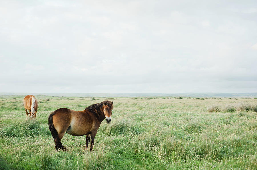 Two Horses In Field Photograph by Suzanne Marshall