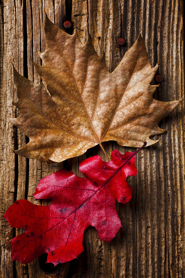 Two Photograph - Two Leafs  by Garry Gay
