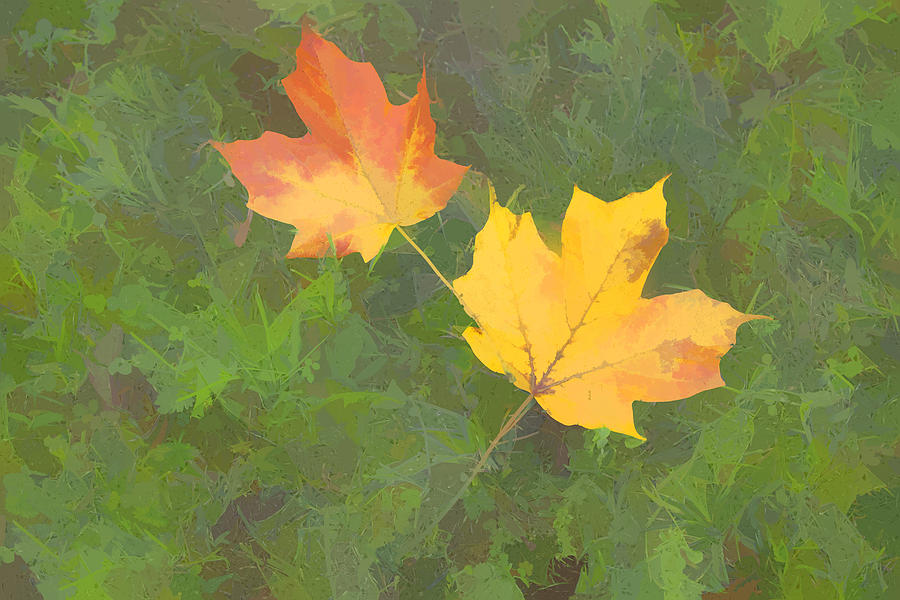 Fall Color Photograph - Two Leafs In Autumn by Indiana Zuckerman