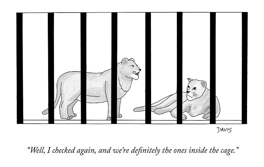 Two Lions In A Cage Converse Drawing by Mathew Stiles Davis