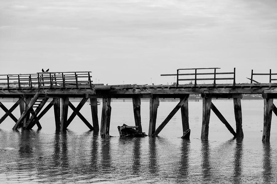 Bay Photograph - Two Little Birds by Svetlana Sewell