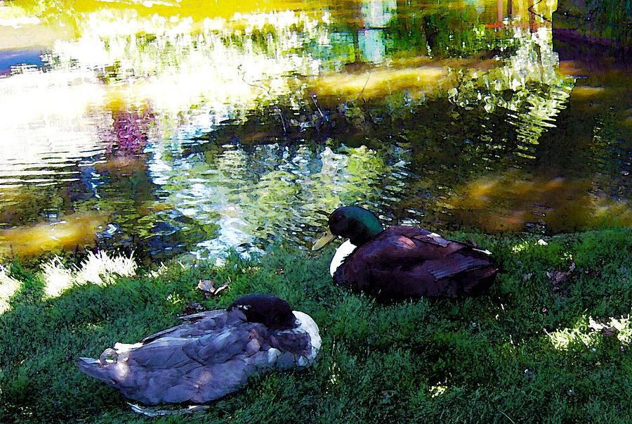 Two Mallard Ducks Feng Shui Love Photograph