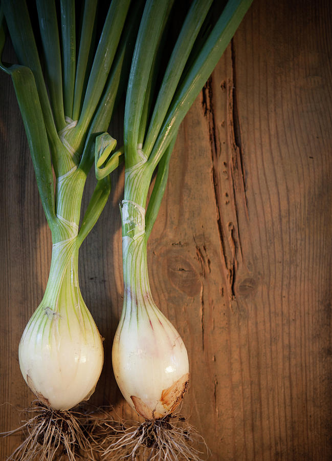 Two Onions Photograph by Peter Chadwick Lrps
