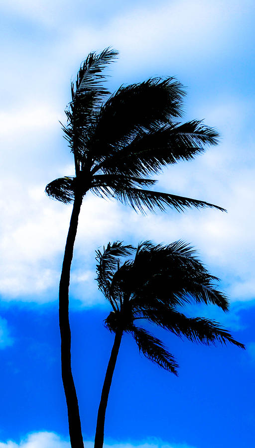 Palm Trees Photograph - Two Palms by Lisa Cortez