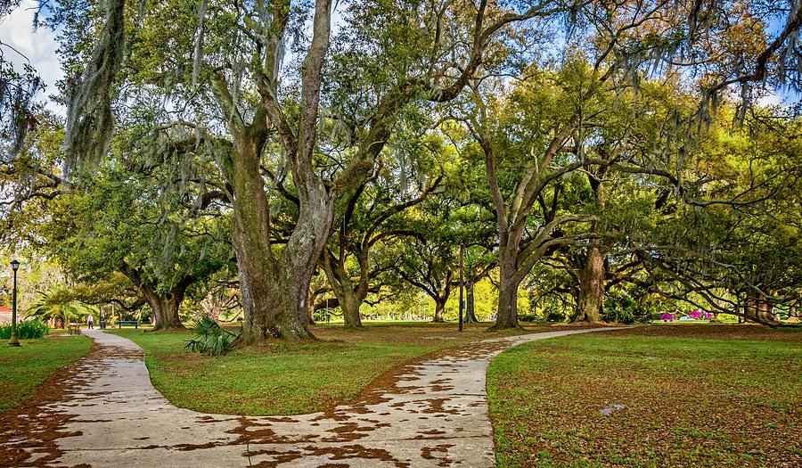 Steve Harrington Photograph - Two Paths Diverged In A Live Oak Wood...  by Steve Harrington