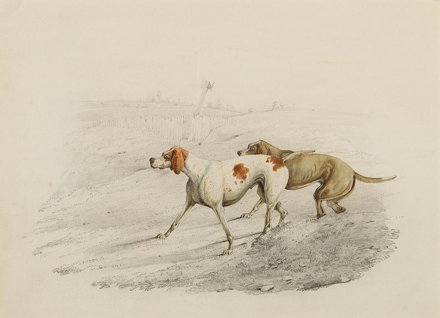 Pointer Dogs Painting - Two Pointers by Henry Thomas Alken