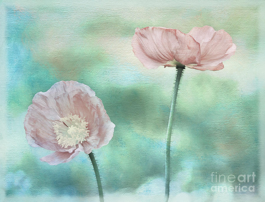 Poppy Photograph - Two Poppies Textured Photograph by Clare VanderVeen