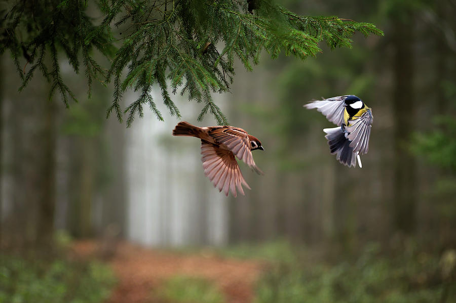 Birds Photograph - Two by P?ter Bogn?r