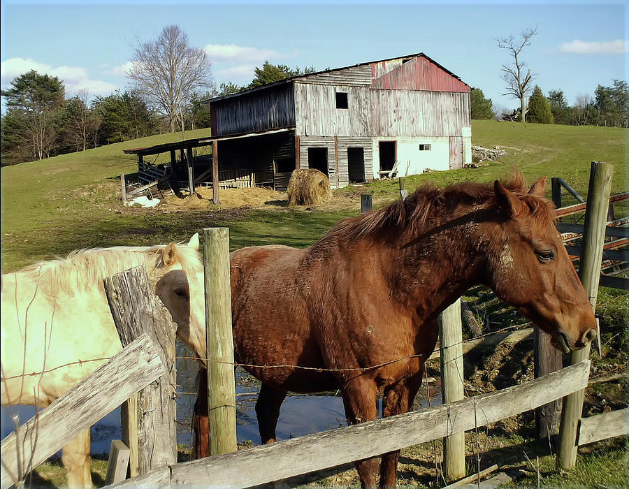 Horse Photograph - Two Quarter Horses In A Barnyard by Chris Flees