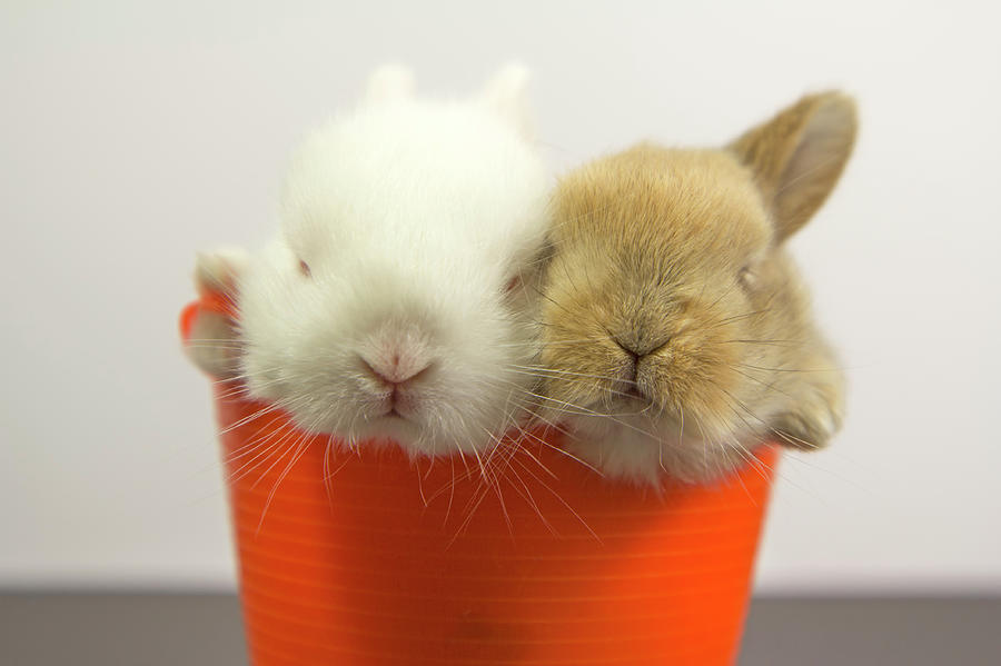 Two Rabbits Inside A Basket Photograph by Fernando Trabanco Fotografía