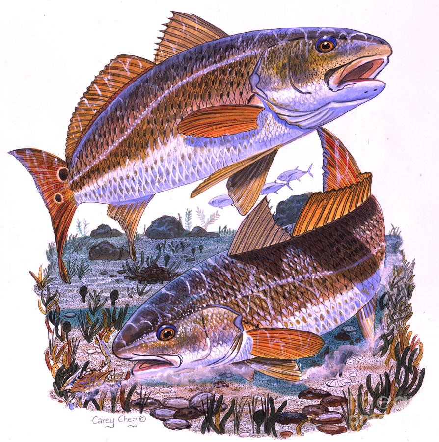 Redfish Painting - Two Reds by Carey Chen