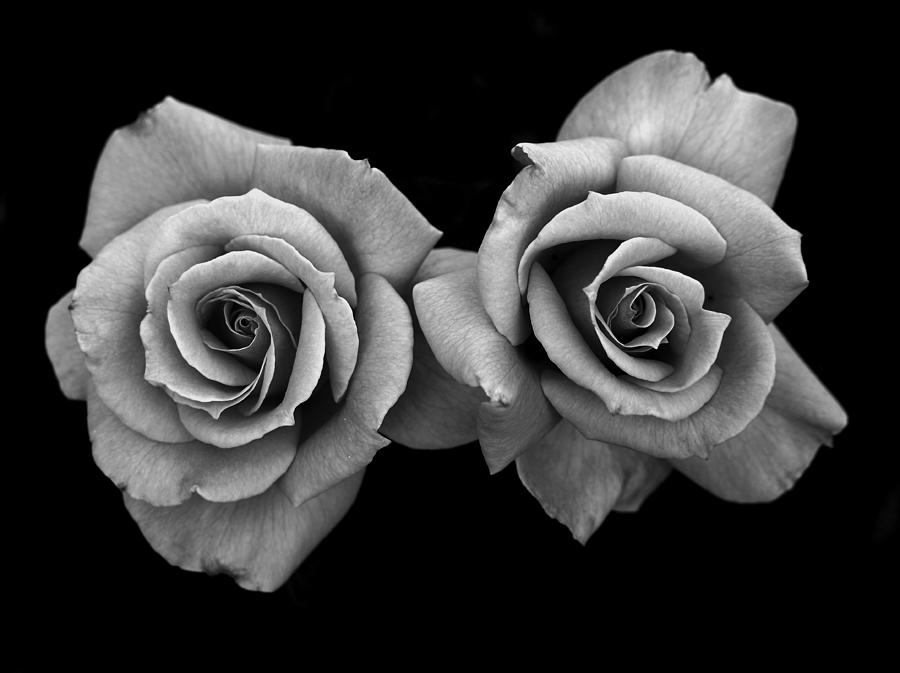 Two Roses Photograph By Rob Hall