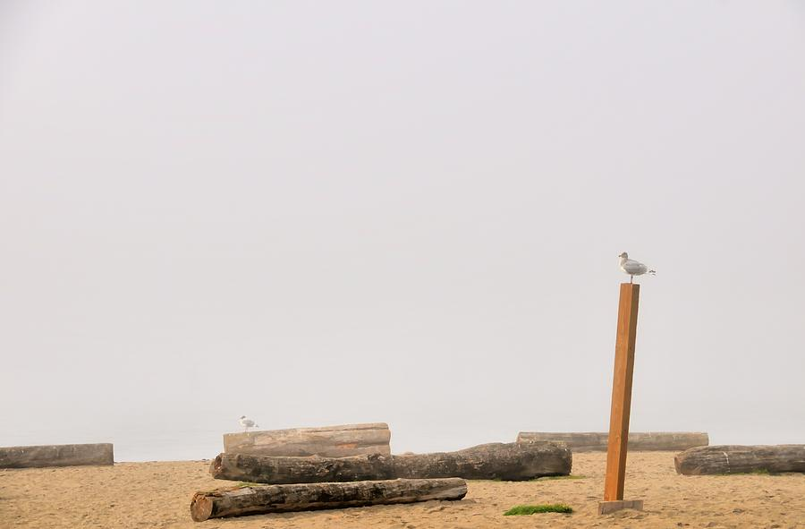 Afternoon Photograph - Two Seagull Solitudes by Doug Farmer