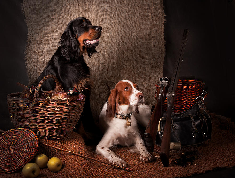 Still Life Photograph - Two Setters... by Tanya Kozlovsky