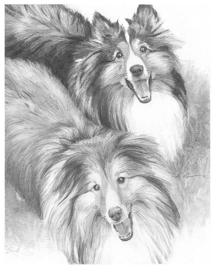Two Shelties Pencil Portrait Drawing by Mike Theuer