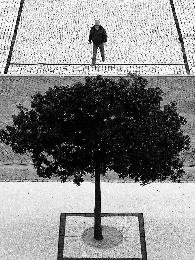 Tree Photograph - Two Silver Trees by Paulo Abrantes