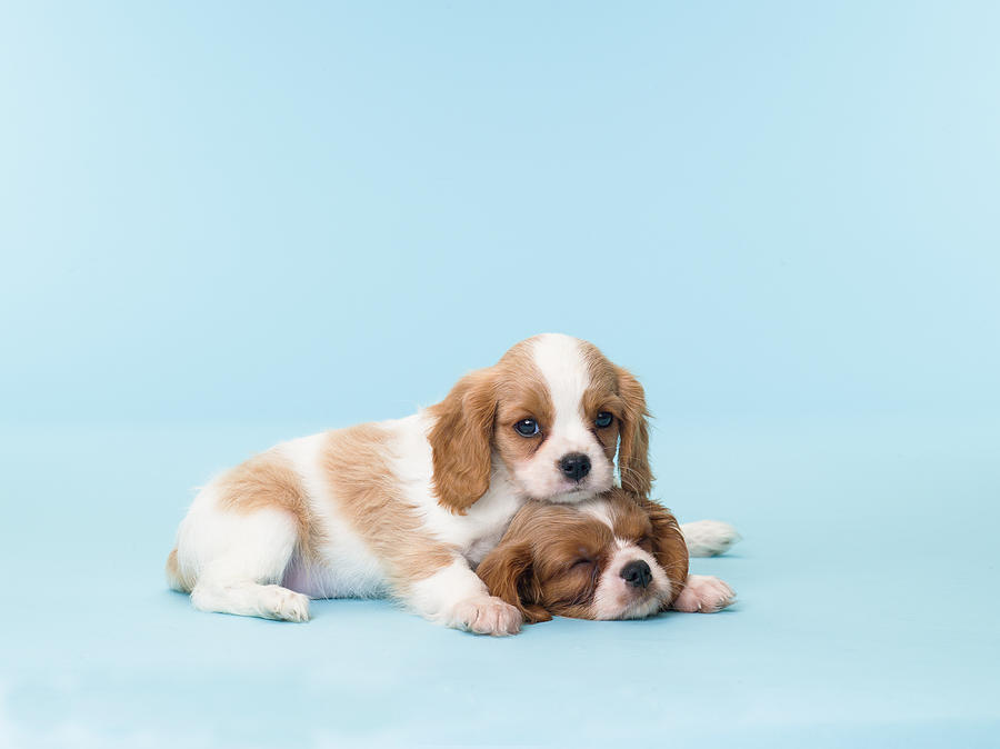 Two Sleepy Puppies Photograph by Catherine Ledner