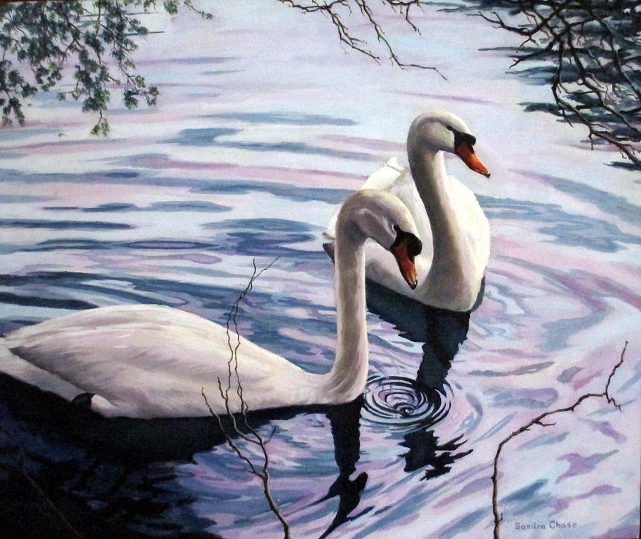 Swan Painting - Two Swans A Swimming by Sandra Chase