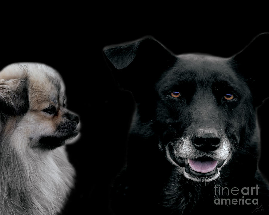 Dogs Photograph - Two Types Of Mutts by Nola Lee Kelsey