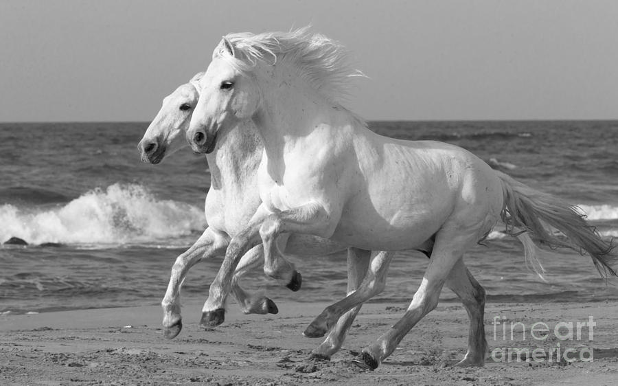 White running horses - photo#49
