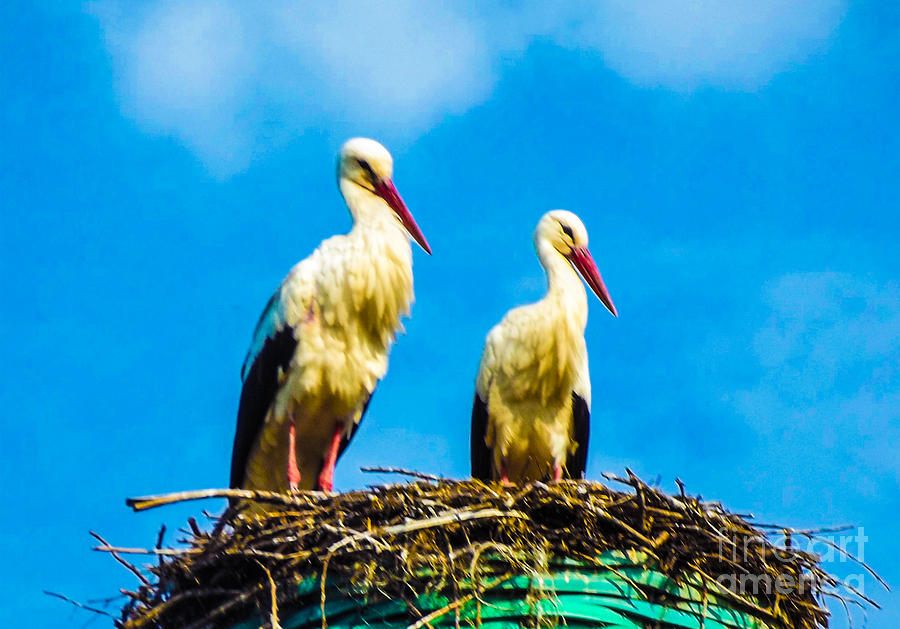 Nature Digital Art - Two White Storks 16 by Algirdas Lukas