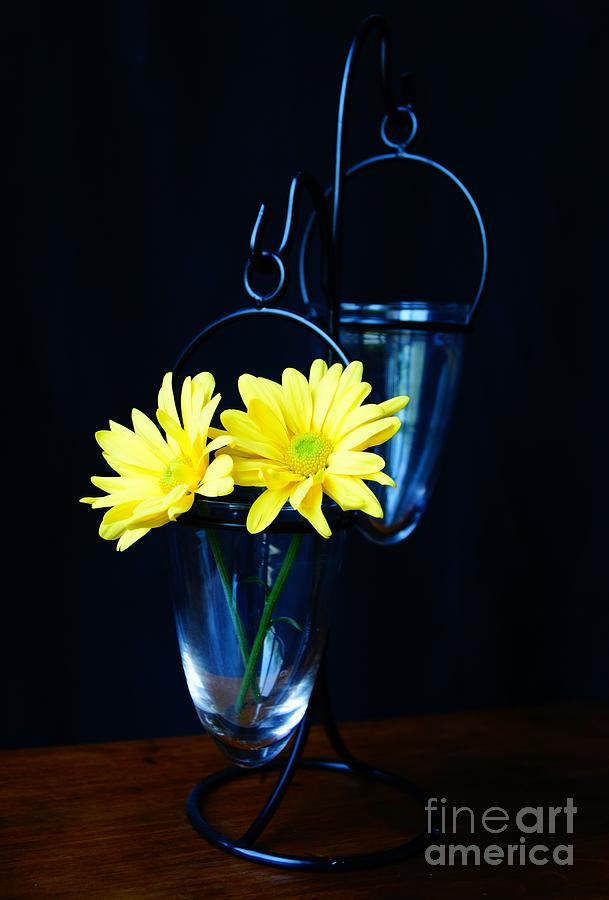 Two Yellow Daisies by Kerri Mortenson