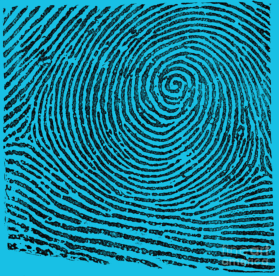 Fingerprint Photograph - Typical Whorl Pattern, 1900 by Science Source