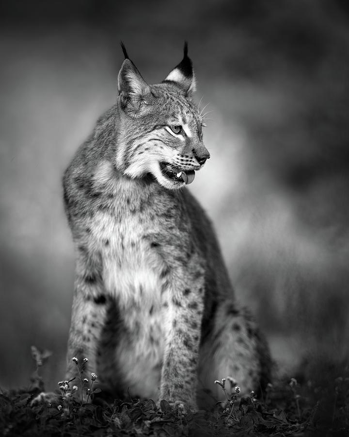Animal Photograph - U N I Q U E by Fegari