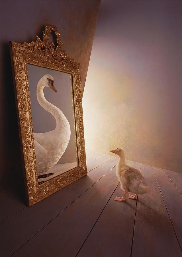 ugly Duckling Looking At Swan In Mirror (digital Composite) Photograph by Graham Ford
