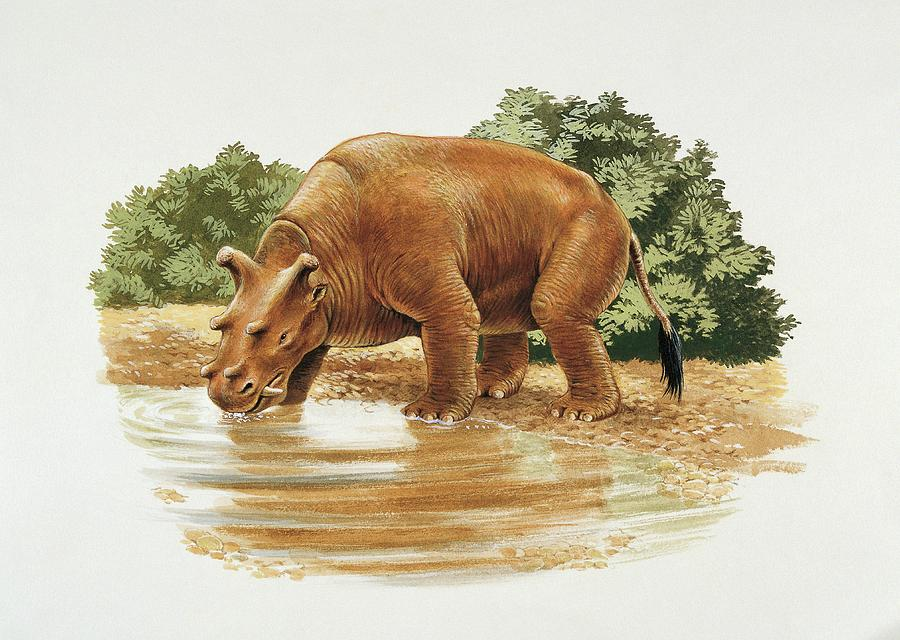 Colour Image Photograph - Uintatherium by Deagostini/uig/science Photo Library